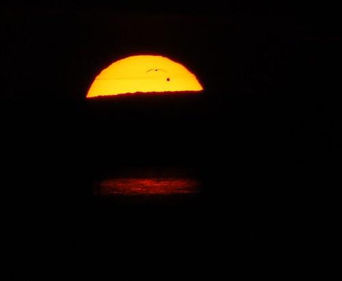 sun bird newjersey venus space transit somerspoint atlanticcounty instantfave venusiantransit