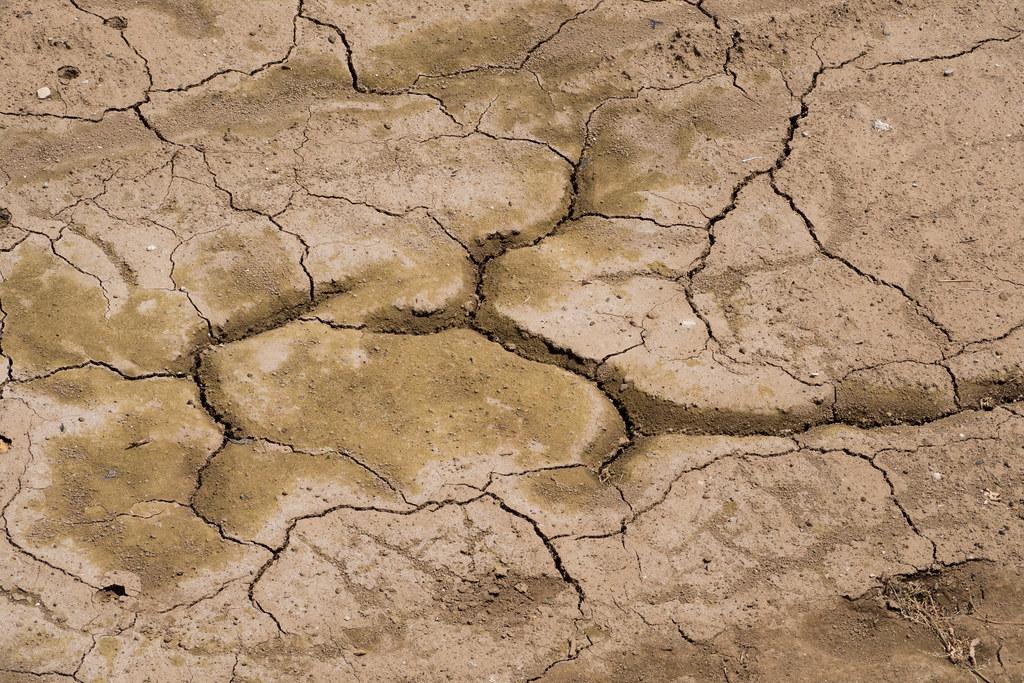 乾燥した畑 2012/06/30 OMD00434