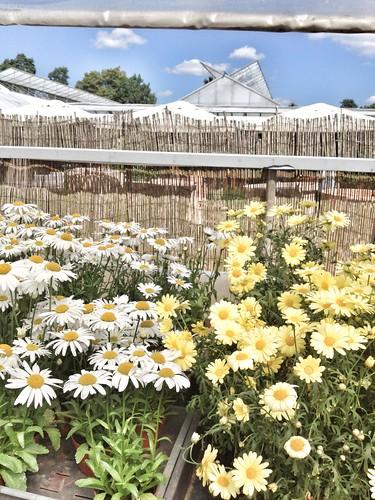 ulriksdal garden