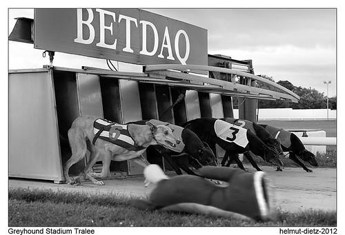 Kingdom Greyhound Stadium Tralee, Ireland
