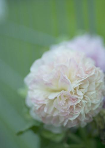 この花の名前を僕はまだ知らない