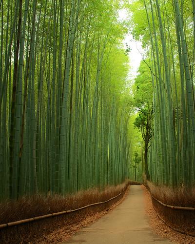 japan kyoto 京都 日本 嵐山 嵯峨野
