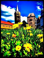Some #yellow #flower with #Eisenach #city #gate in background.