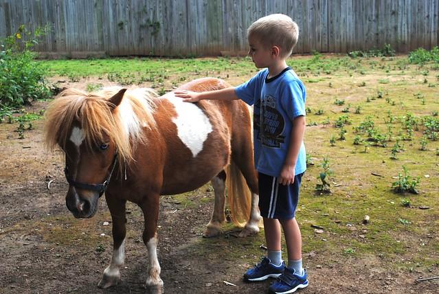 seeing Wanda's horses