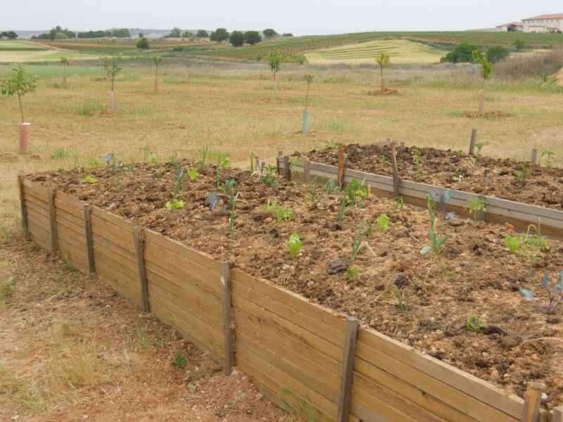 Un huerto elevado, cultivar hortalizas sin agacharse
