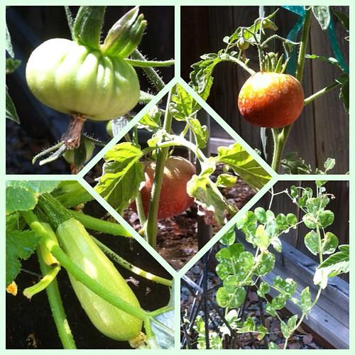Garden Porn #organic #garden #stuffigrew #noms