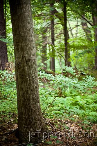 12-07woods02