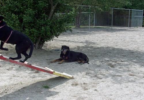 DogPark_LolaIzzy_6912e