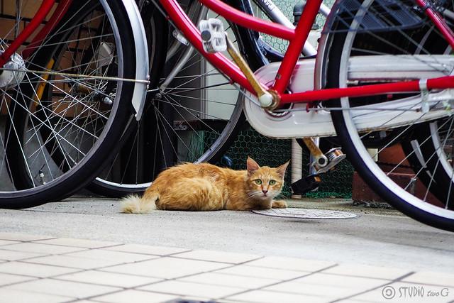 Today's Cat@2016-08-18