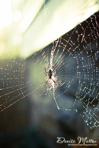 298: Wet web