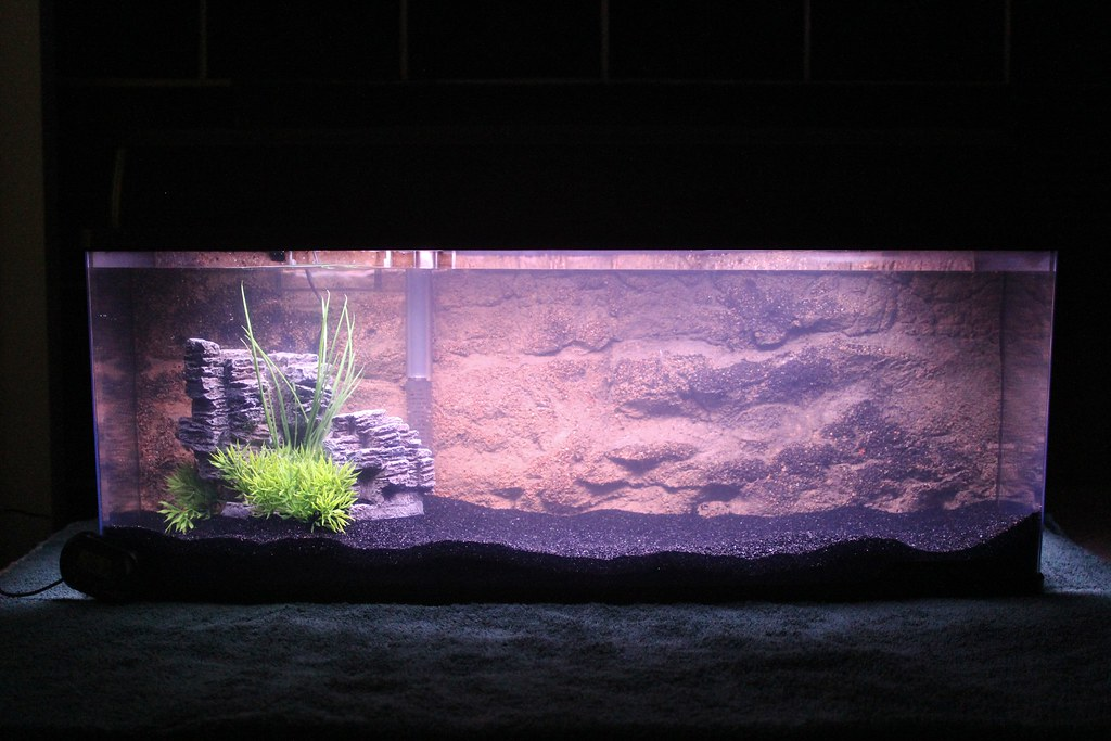 My petco bookcase aquarium wide and narrow member 39 s for Wide fish tank