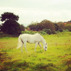 Beautiful horse near Portlet