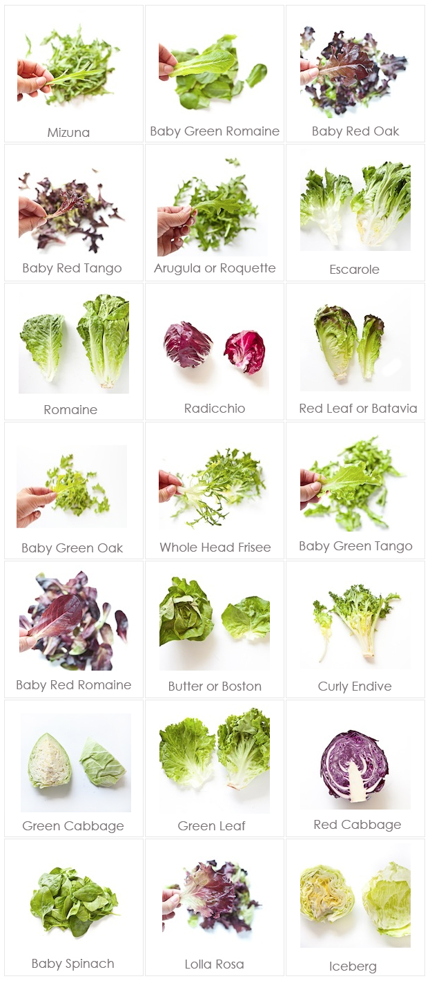 lettuce varieties with photos and names