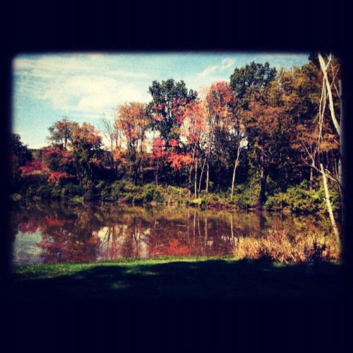 #autumn #fall #leaves #pond #ithaca #reflection