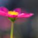 blur by shrekinson