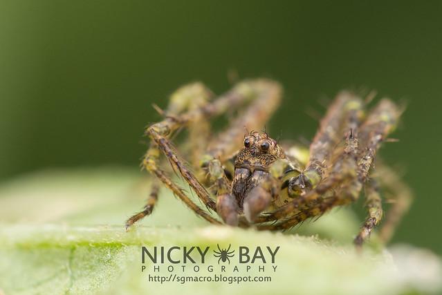Orb Weaver Spider (Araneidae) - DSC_5670