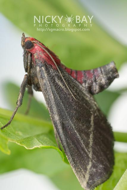 Moth - DSC_5642
