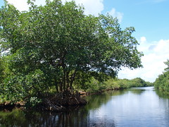 Everglades National Park Florida Boat Tour In the Flamingo near the Whitewater Bay backcountry 2012 Trees Swamp Tropical Vegetation Forest