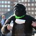 2012-09-22 gorillas-3196