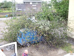Baum stürzt auf Auto - 24.09.12