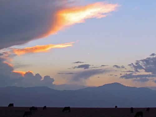 sunset black clouds geotagged centennial colorado cows state angus peak springs coloradosprings co pikes prairie plains floyd muaddib pikespeak americanwest westernusa coloradospringscolorado coloradospringsco centennialstate floydmuaddib