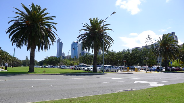 Palm trees and the CBD