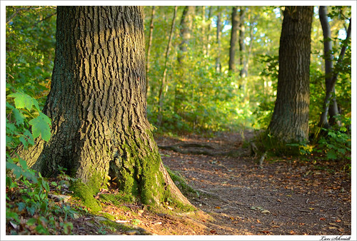 tree nature forest 35mm natur mm nikkor f18 35 wald baum dx eichsfeld afsdxnikkor35mmf18g