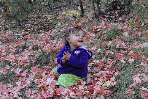 Jovie sitting in the red leaves 6