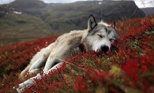 25-Most-Beautiful-Animals-Photography-StumbleUpon-10