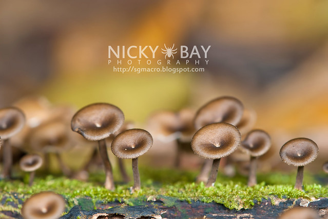 Mushrooms - DSC_6251