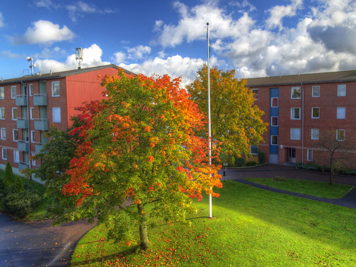 autumn houses light tree fall göteborg maple apartments colours view sweden flag gothenburg pole sverige residential hdr bergsjön canonefs1785mmf456isusm canoneos7d astronomgatan