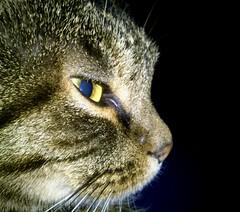 Nachts sind alle Katzen grau