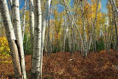 Marion Brooks Natural Area (2)