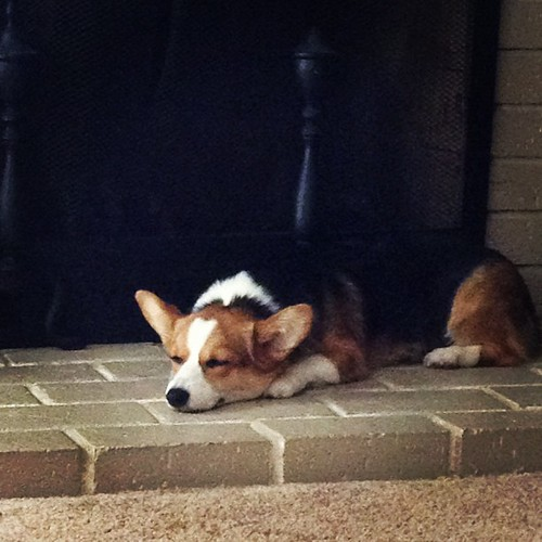 Nap time. #corgi #corgistagram #puppy