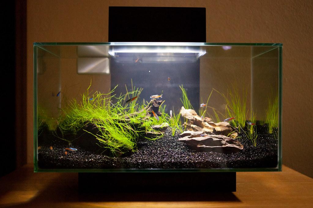 Oscar Fish Tank Setup Traffic Club