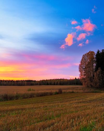 trees sunset field suomi finland lappeenranta farmersfield southkarelia