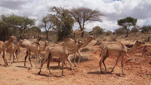 geotagged kenya riftvalley enkokidongoi 179kmtoenkokidongoiinriftvalleykenya geo:lat=2549394 geo:lon=36815938