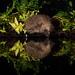 Hedgehog by wattysphotos