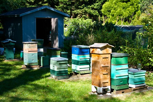 Seattle Hives