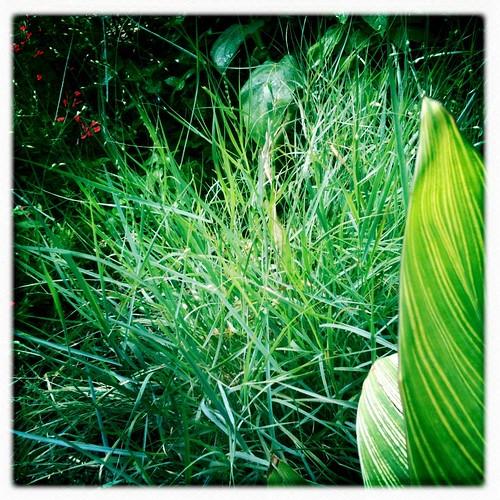 Garden August 2012