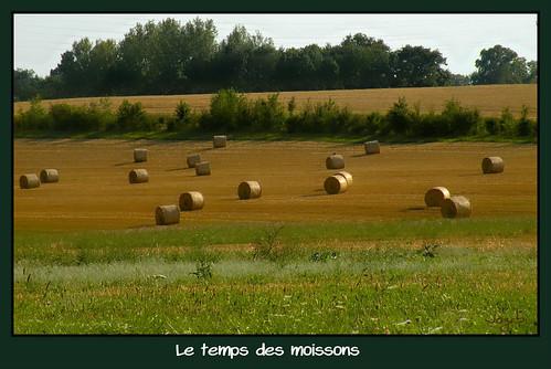 Du beau travail de nos paysans ! by Jogabi-Michèle