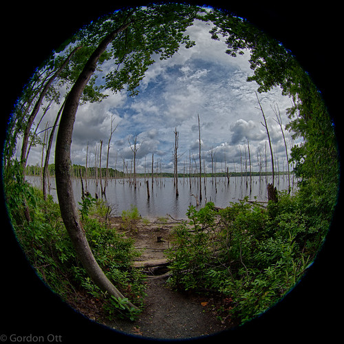 wood trees summer landscape newjersey path nj fisheye monmouthcounty 180degrees manasqaunreservoir