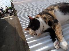 屋根の上でくつろぐ猫