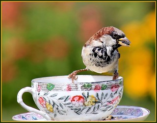Sparrow Eating Sunflower Seeds OnYard Cup