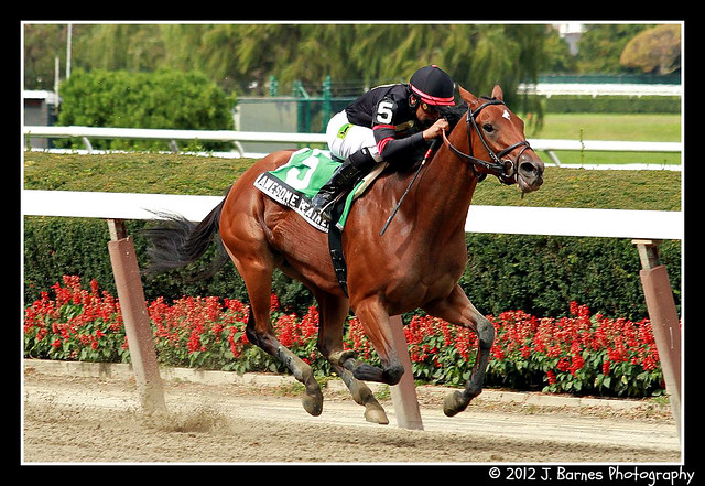 Awesome Feather Makes it 10 For 10 and wins $85,000 The Nasty Storm Stakes (1)