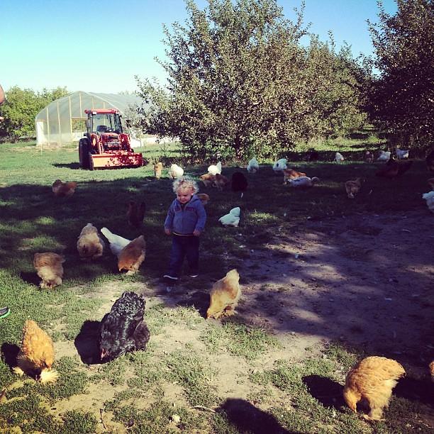 #chickens!!
