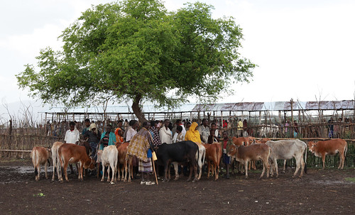 Cattle market in Mi'eso area