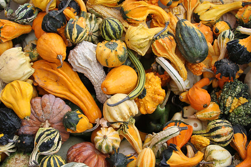 Gourds for Happy Halloween Weekends