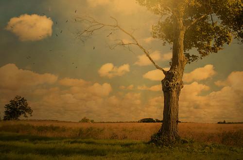 [フリー画像素材] 自然風景, 樹木, 田園・農場, 雲 ID:201210050600