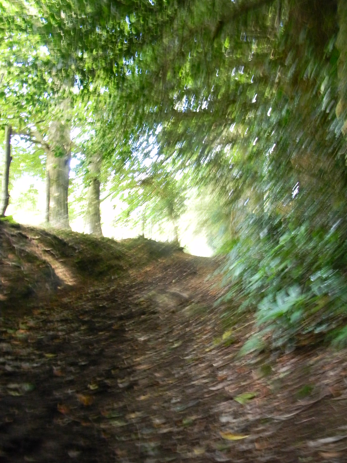 "Holloway My camera was having an ""impressionist"" day. Haslemere Circular"